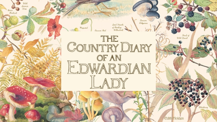 Country Diary